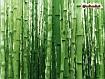 Sfondo: Bamboo