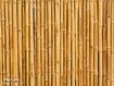 Sfondo: Bamboo secco
