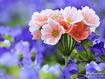Sfondo: Beautiful Bouquet