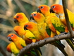 Sfondo: Beautiful Parrots