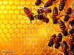 Sfondo: Bees