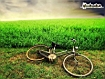 Sfondo: Bike And Field