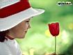 Sfondo: Il cappello e il fiore