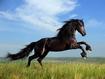 Sfondo: Black Horse