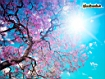 Sfondo: Blooming Spring