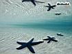 Blu Sea Star