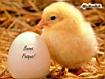 Sfondo: Buona Pasqua