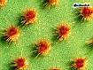 Sfondo: Dettagli del cactus