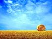 Sfondo: Il grano e il cielo