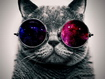 Sfondo: Cat Cool