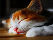 Sfondo: Cat Sleeping