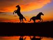 Sfondo: Cavalli al tramonto