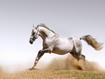 Sfondo: Cavallo bianco