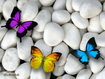 Sfondo: Colorful Butterflies