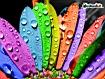 Sfondo: Colorful Petals