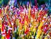 Sfondo: Colorful Spring