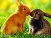 Sfondo: Conigli