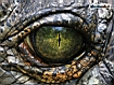 Sfondo: Crocodile Eye