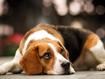 Sfondo: Cucciolo triste