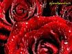 Sfondo: Cuore di rosa