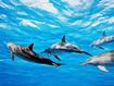 Sfondo: Delfini in gruppo