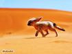 Sfondo: Desert Fox