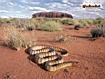 Sfondo: Desert Snake
