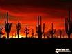 Sfondo: Deserto della Sonora