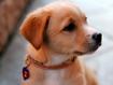 Sfondo: Sweet Dog