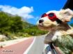 Sfondo: Dog Trip