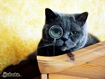 Sfondo: Dr. Cat