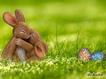 Sfondo: Easter Bunny