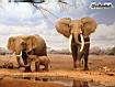 Sfondo: Elephant Family