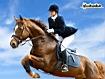 Sfondo: Equitazione