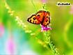 Sfondo: Farfalla colorata