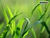Sfondo: Fili di erba