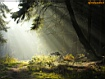 Sfondo: Foresta