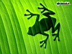 Sfondo: Frog