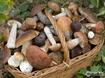 Sfondo: Funghi