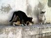 Sfondo: Cats In Love