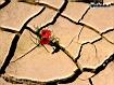 Sfondo: Fiore nel deserto