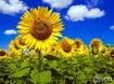 Sfondo: Sotto il sole
