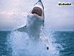 Sfondo: Great Shark