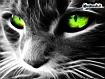 Sfondo: Green Eyes