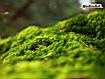 Sfondo: Green Forest