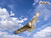 Sfondo: Falco