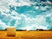 Sfondo: Hay Field