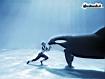 Sfondo: Killer Whale