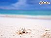 Sfondo: Krab On Beach