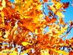 Sfondo: Yellow Leaves